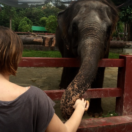 elephant sanctory