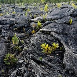 forêt domaniale du grand brûlé